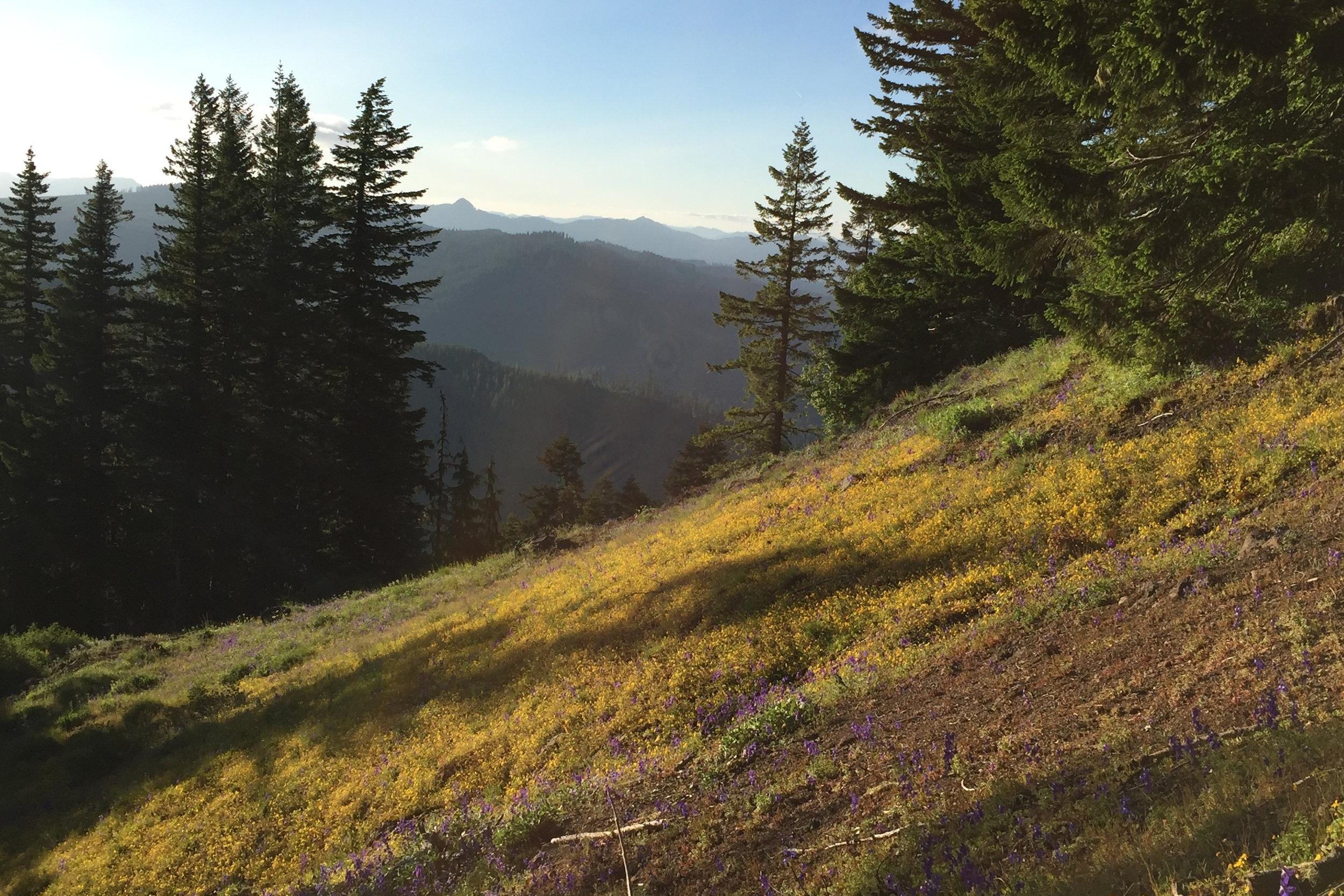 Iron Mountain population (Photo: Lila Fishman)