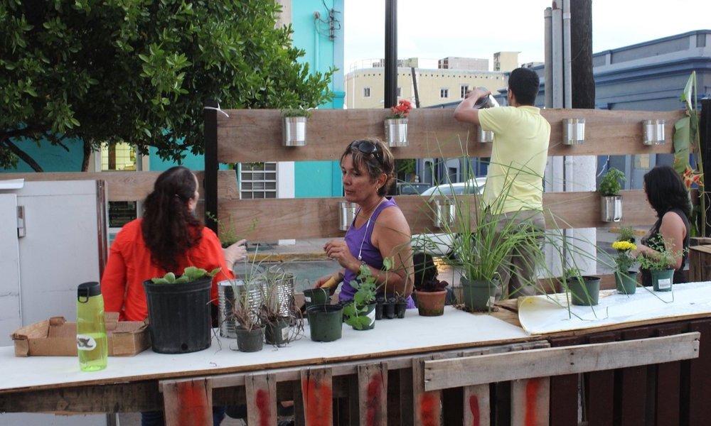 Talleres de Jardines Agroecológicos - Una iniciativa liderada por Braulio Quintero, quien entrenóen el Proyecto Agroecológico El Josco Bravo, en Toa Alta, Puerto Rico, ha impactado a restaurantes y personas locales igualmente. Braulio usa el conocimiento adquirido en El Josco Bravo y lo aplica a pequeños jardines comunitarios y a granjas. Como parte de los talleres, enseña cómo desarrollar diferentes tipos de jardines, tales como: jardines verticales, arboledas de tomate y milpas (maíz, habichuelas y calabaza). Él planifica desarrollar una granja de 3 acres en Lajas Arriba, Puerto Rico.