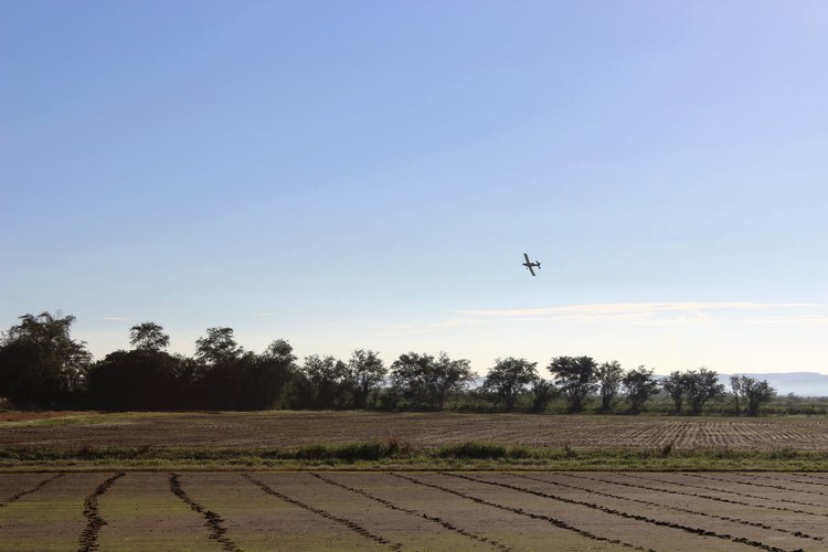 Plane coming in to spray the rice field.