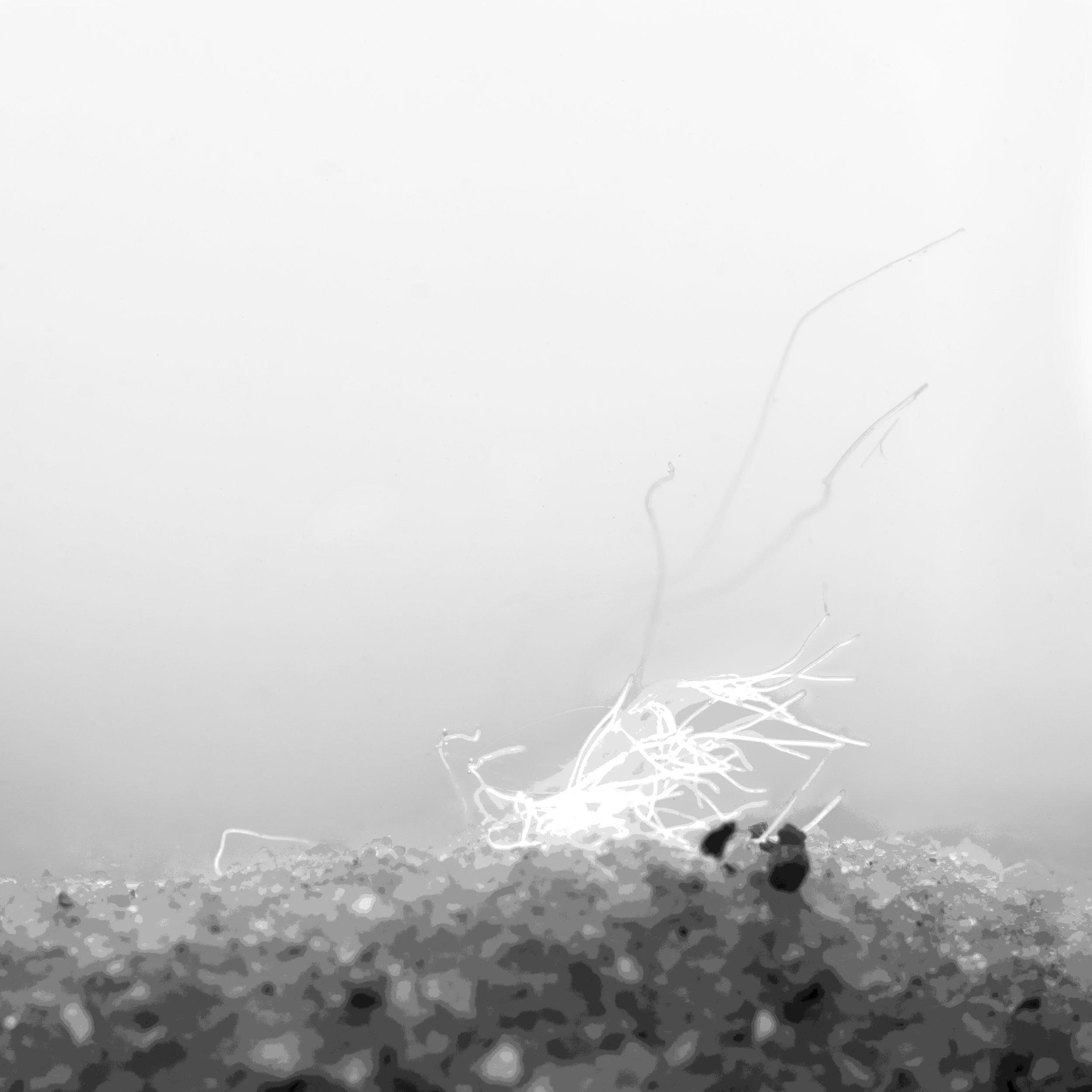 scallops - plastic fibers