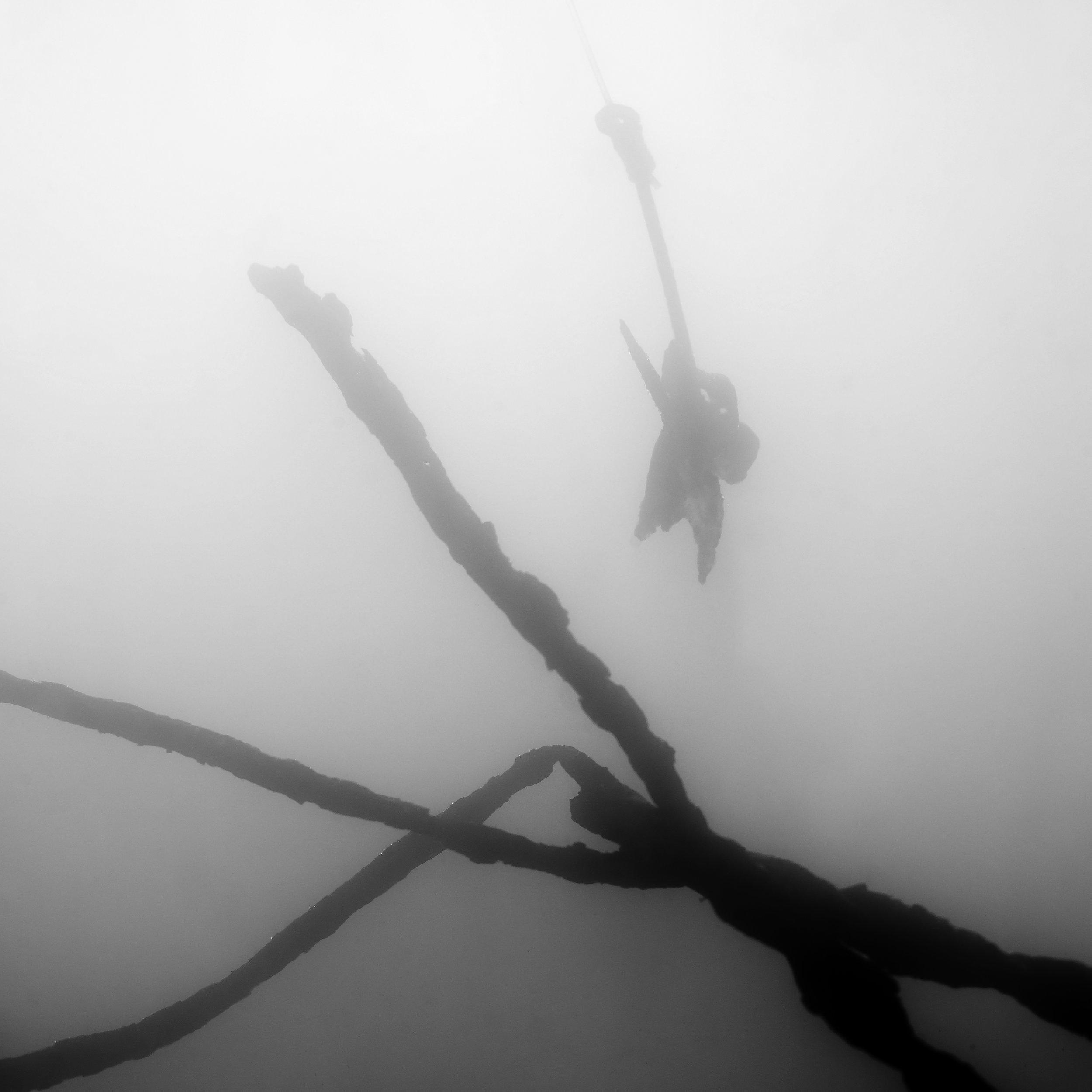 manta ray & sharks - fishing hook