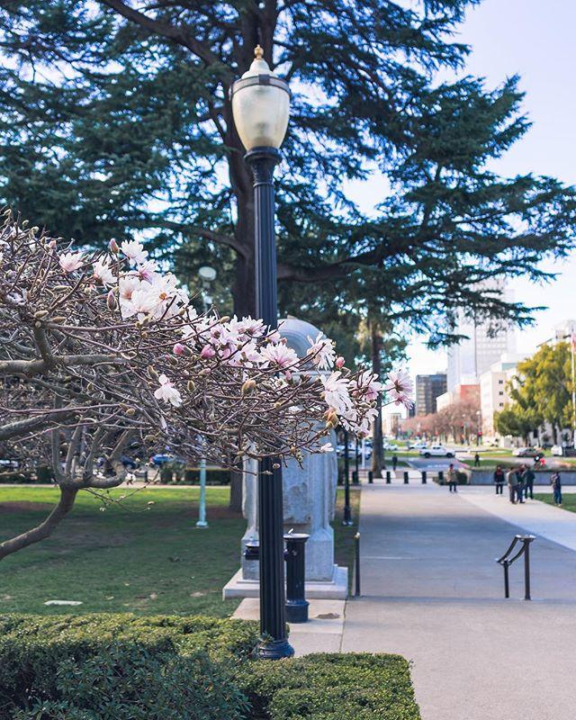 Spring is really right around the corner. This year has definitely had interesting seasons in California! 🌧 ❄️ ☀️ 💨 🌩 ⛈ • • • • • #VisitSacramento #IGersSac #DowntownSac #SacramentoProud #Sacramento #Bay_Shooters #WildBayArea #WildGrammers #AlwaysSF #WorldTones #Way2ill #IGSanFrancsico #CityKillerz #RawCalifornia #TheSanFrancisco #theIMAGED #Californiaholics #SanFranciscoWorld #IGTones #CaliforniaCaptures #CaliGrammers #HeaterCentral #StreetsOfSF #SFGate #SfPulse #EnvisionTones #GramSlayers #ShotzDelight #IGersSF #RDxSac @visitsacramento