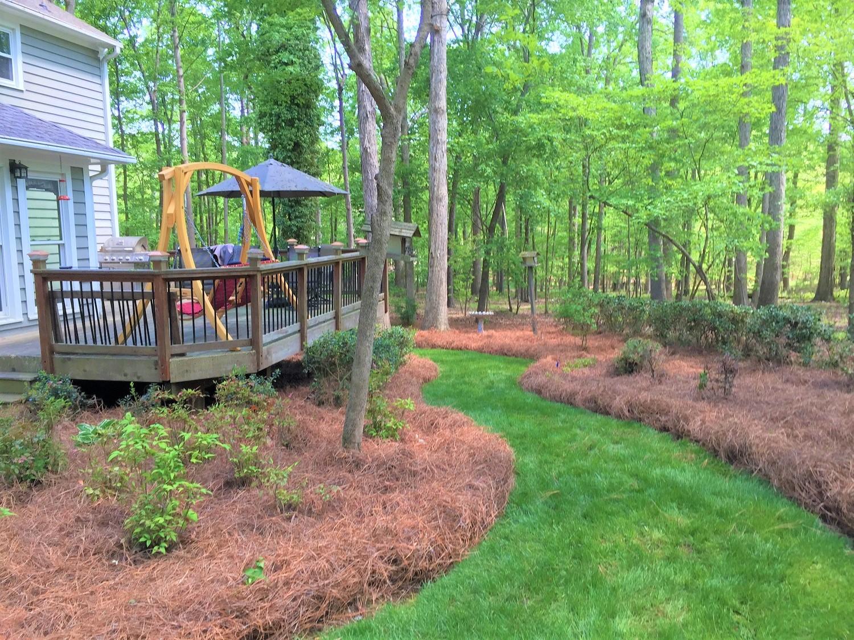 Pine straw mulch around plants in a back yard.