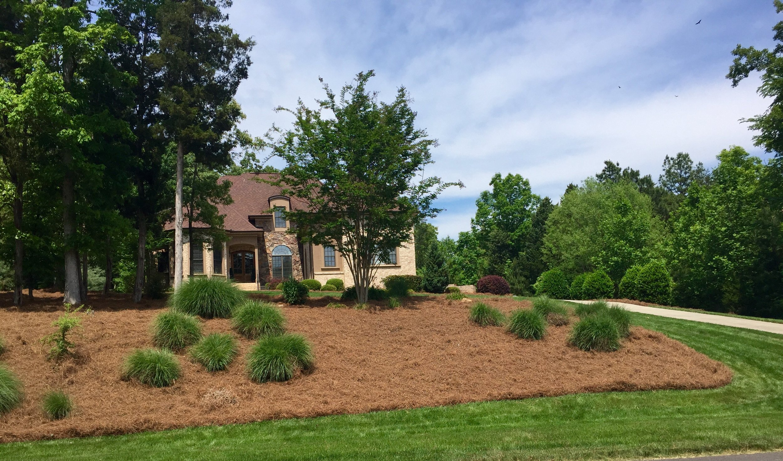 Large pine straw mulch bed in yard.