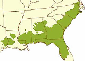 The dark green area represents the historic range of the Long Leaf Pine Tree. An initiative is underway with the USDA to re-establish Long Leaf Pine Trees to their native range.