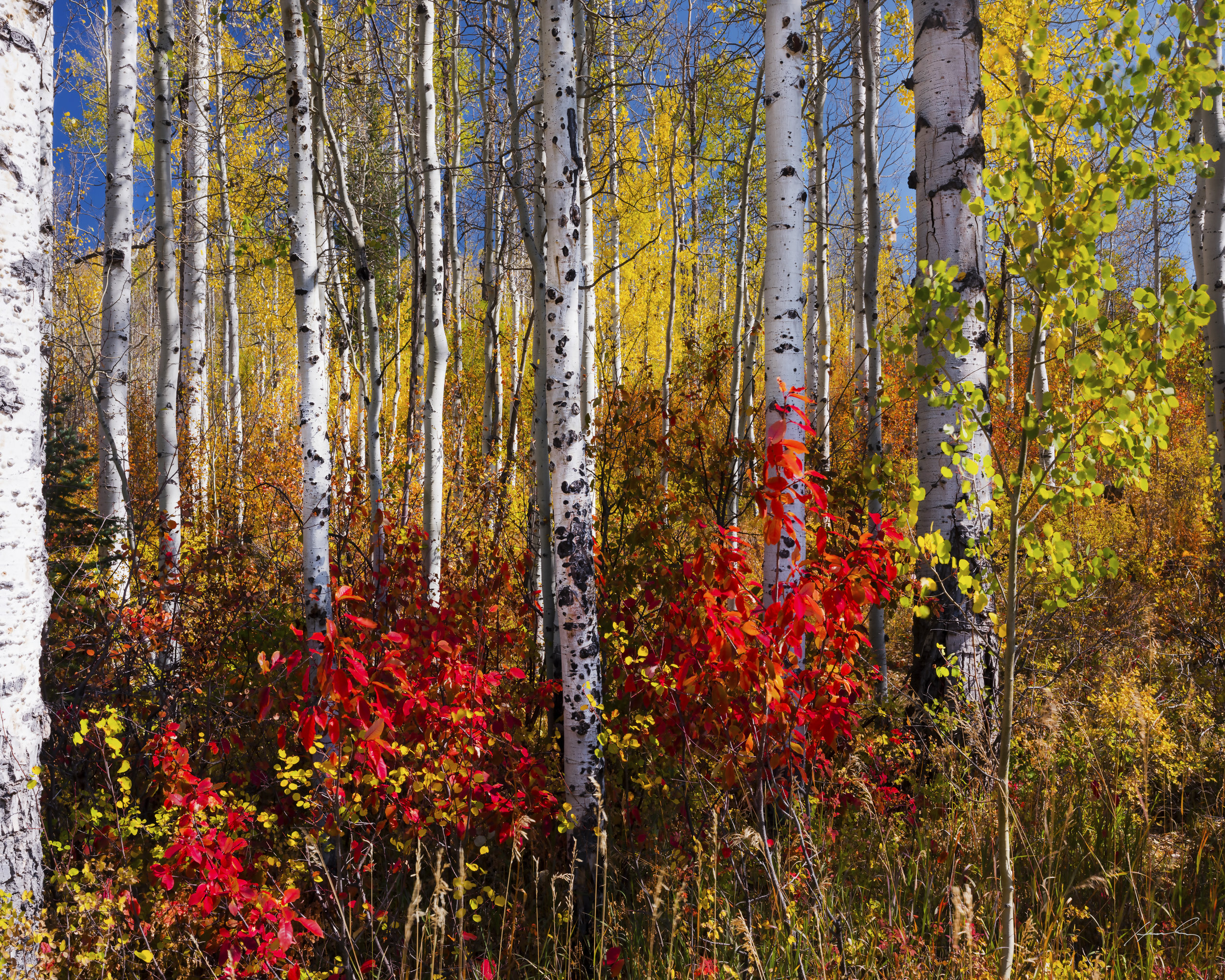 """""""Red and Gold"""" McClure Pass, Colorado"""