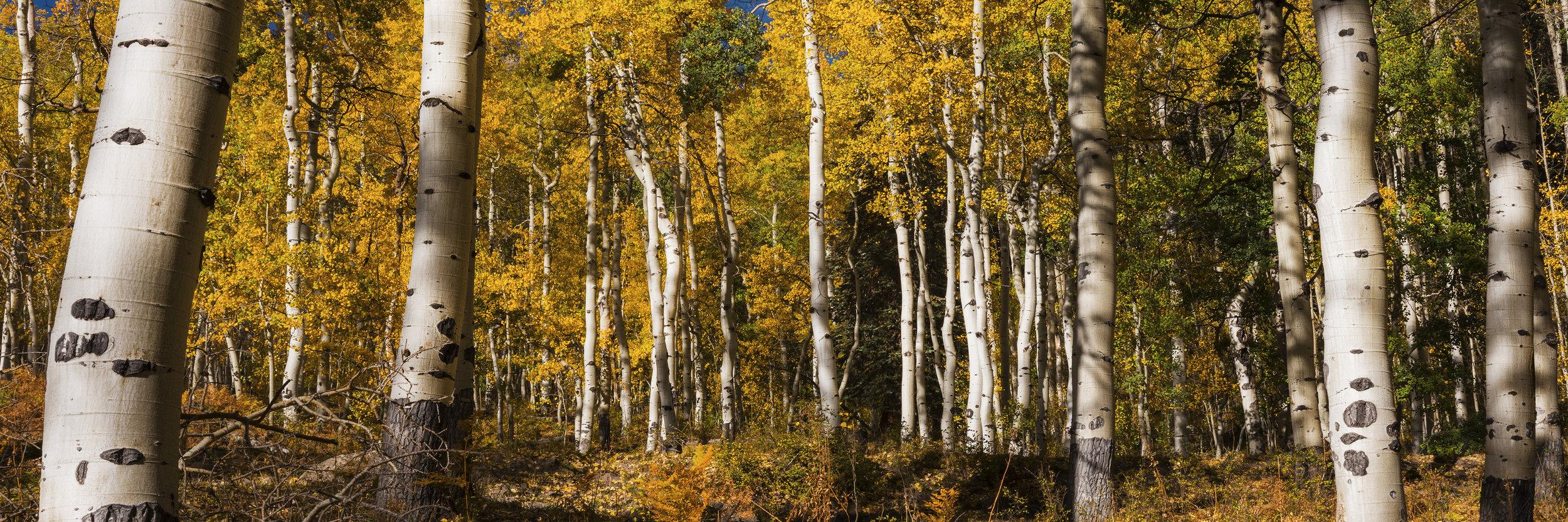 """Sunday Afternoon"" Ridgeway, Colorado"