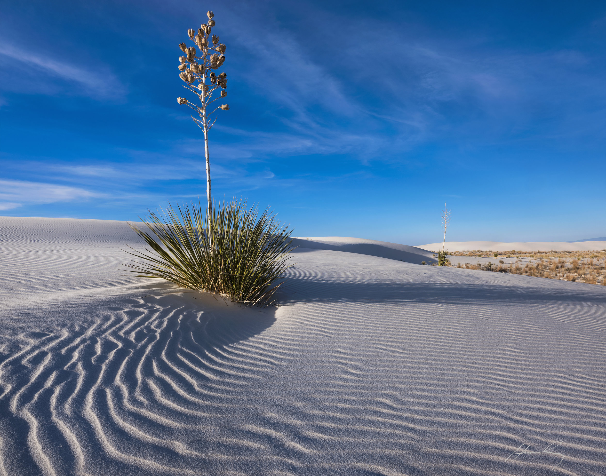 """Lone Yucca"" White Sands N.M., Alamogordo, New Mexico"