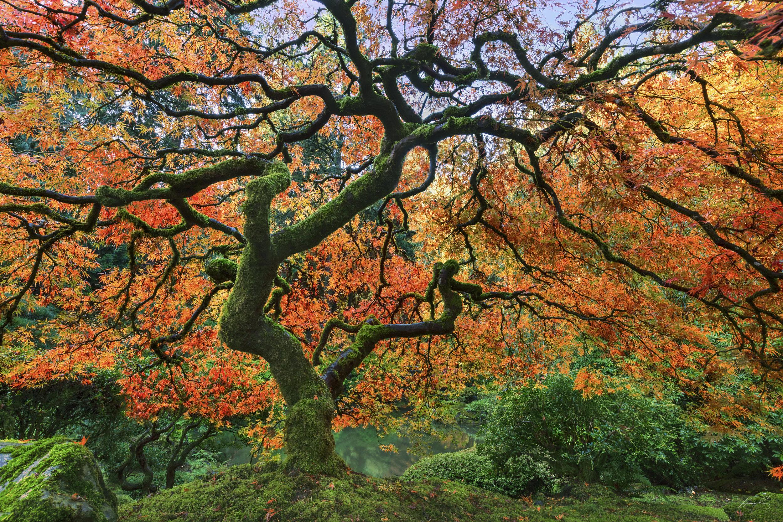 """Fall Delight"" Portland,Oregon"
