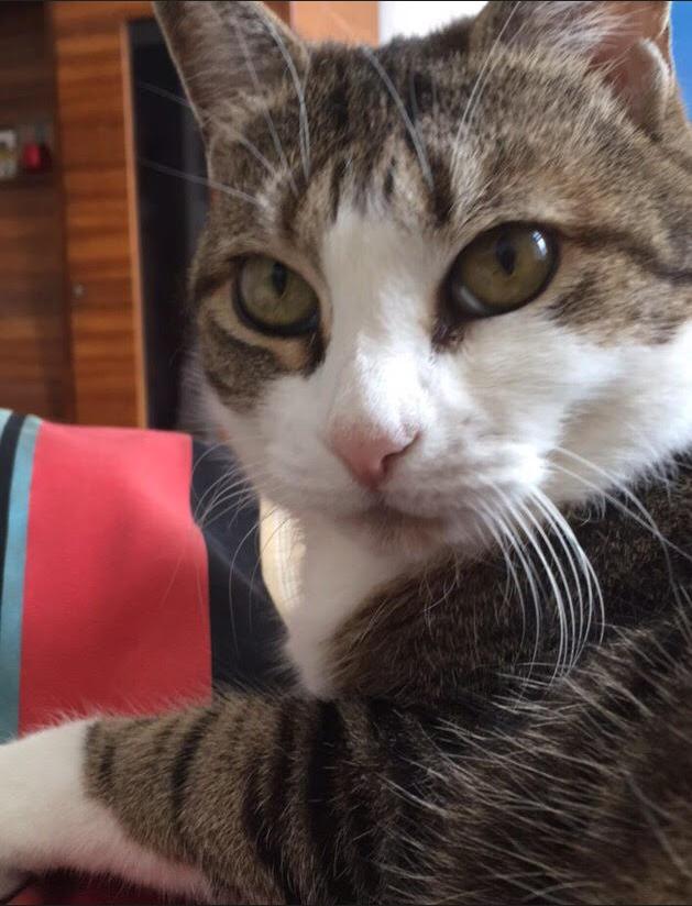 kitty404.jpg
