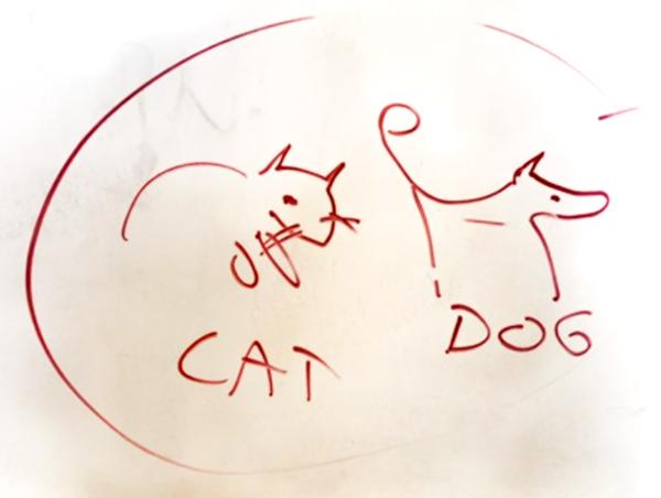 cat-dog.png