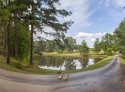 pond-corner-414x306.jpg