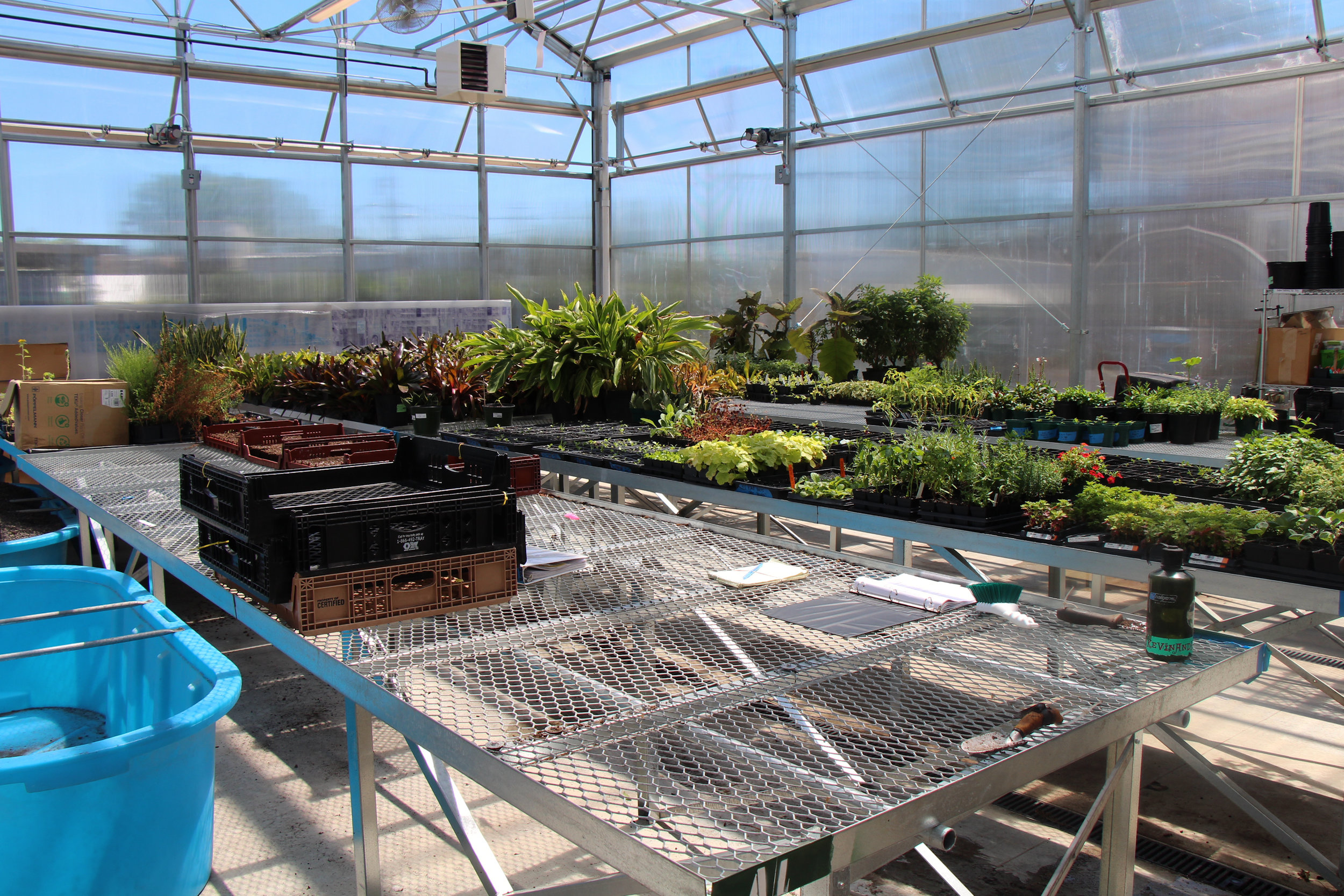 The Greenhouse is a 7,300 sq. ft.room where the growing processes start.
