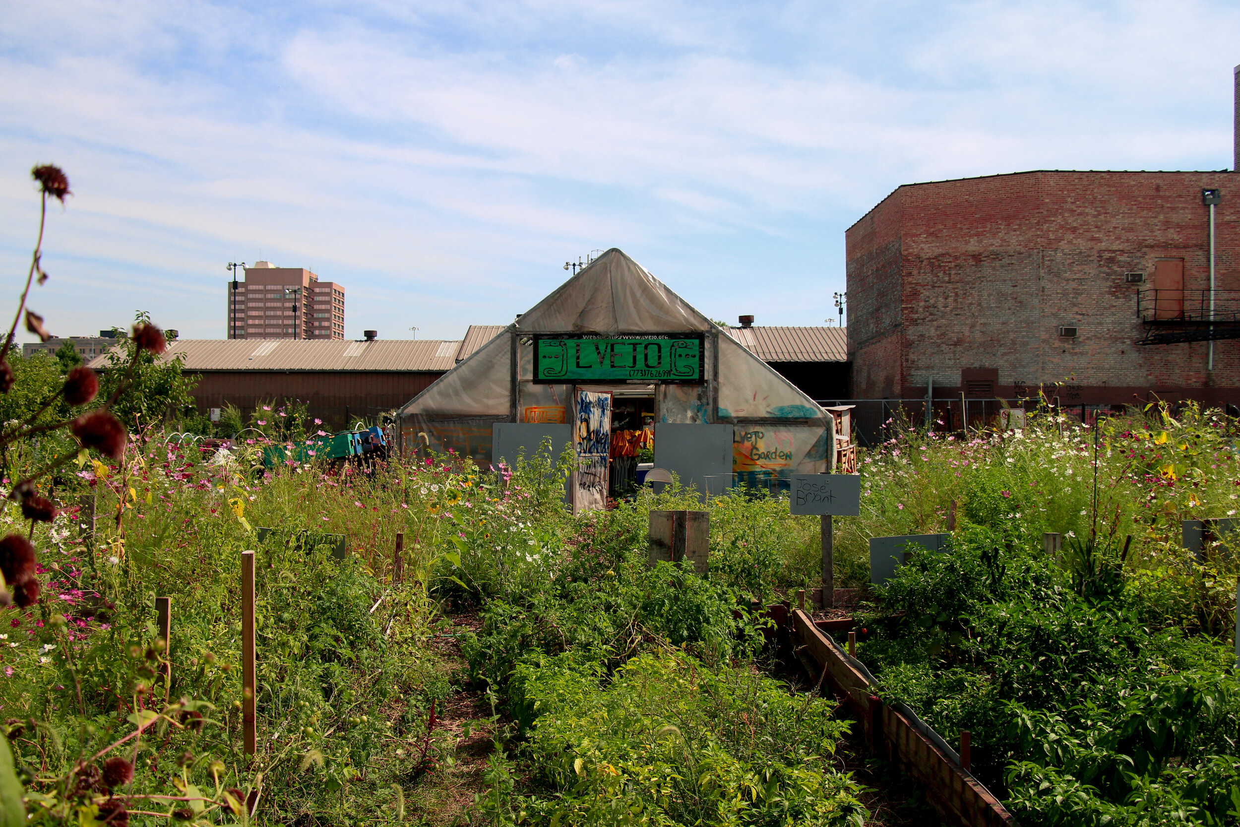 Semillas de Justicia Community garden in Little Village was organized by LVEJO and Troy Street Residents. Today the Garden grows food, raises chickens, and host community events.