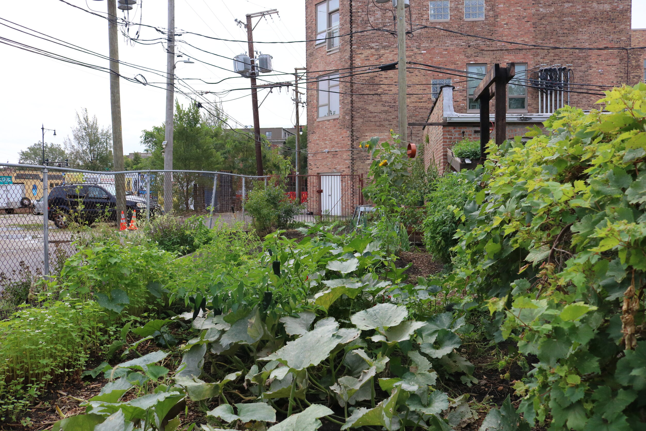 Chicagoan James Silvestro's backyard garden in the Bronzeville neighborhood.