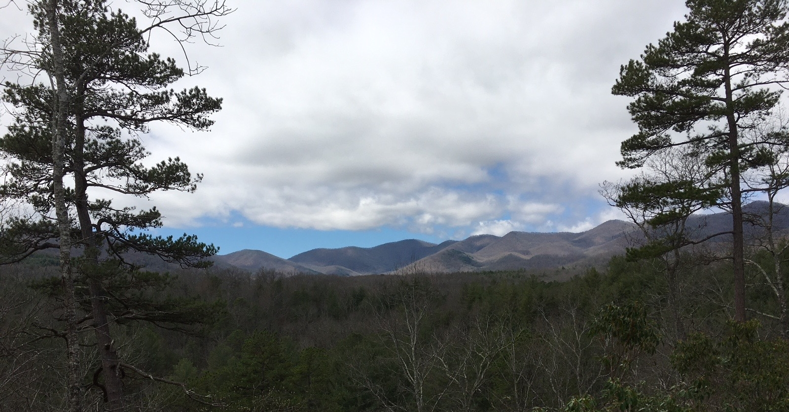 Mountains framed by trees.jpg