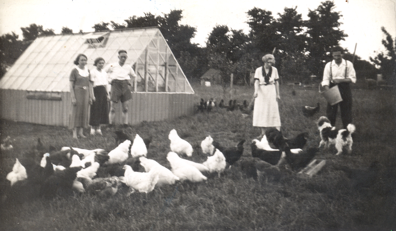 feeding_hens.jpg
