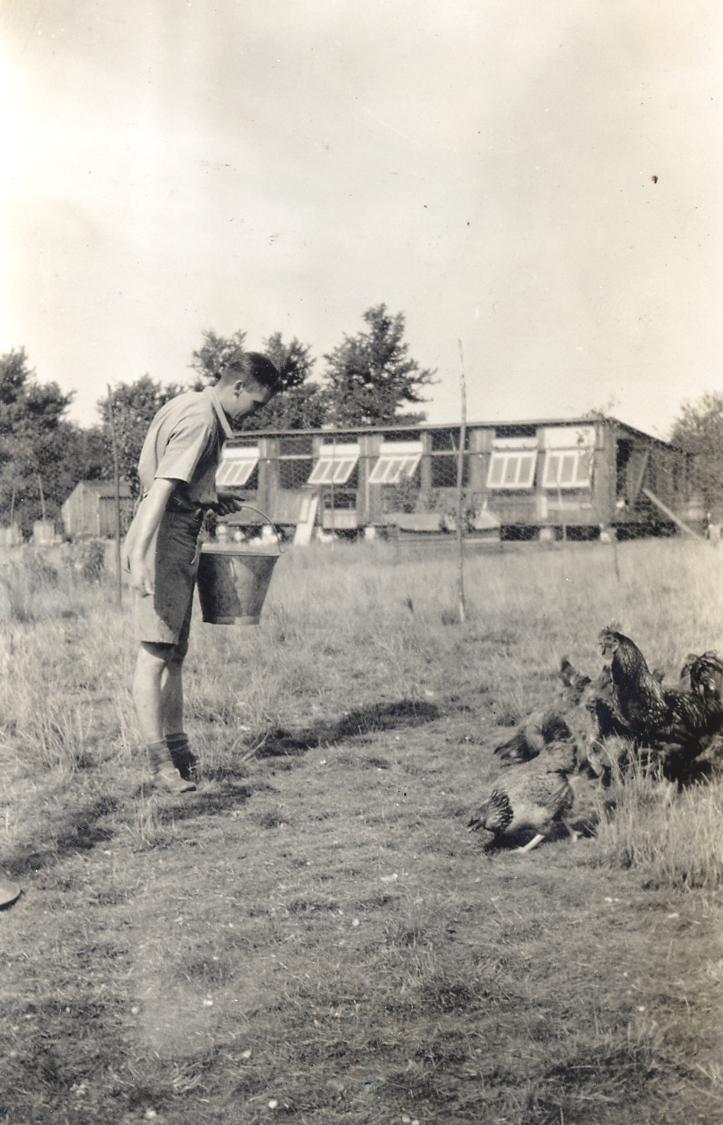 feeding_hens2.jpg