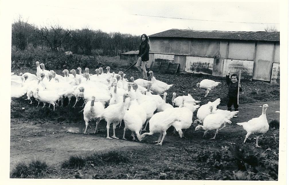 Adrian and Derek Joy driving turkeys 1979