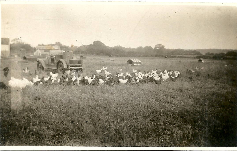 Joy family driving turkeys 1950s