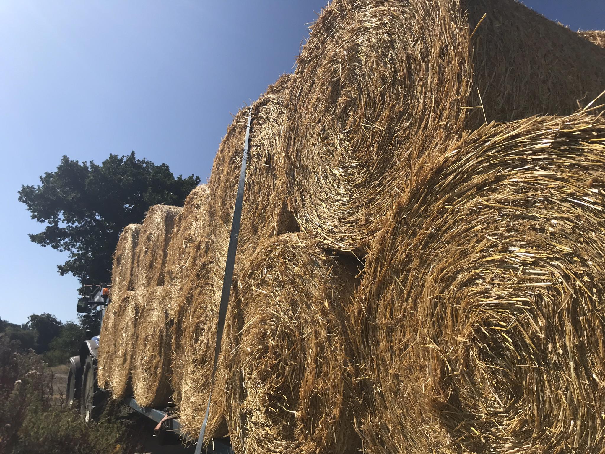 Bramble-farm-oat-straw-turkey-bedding