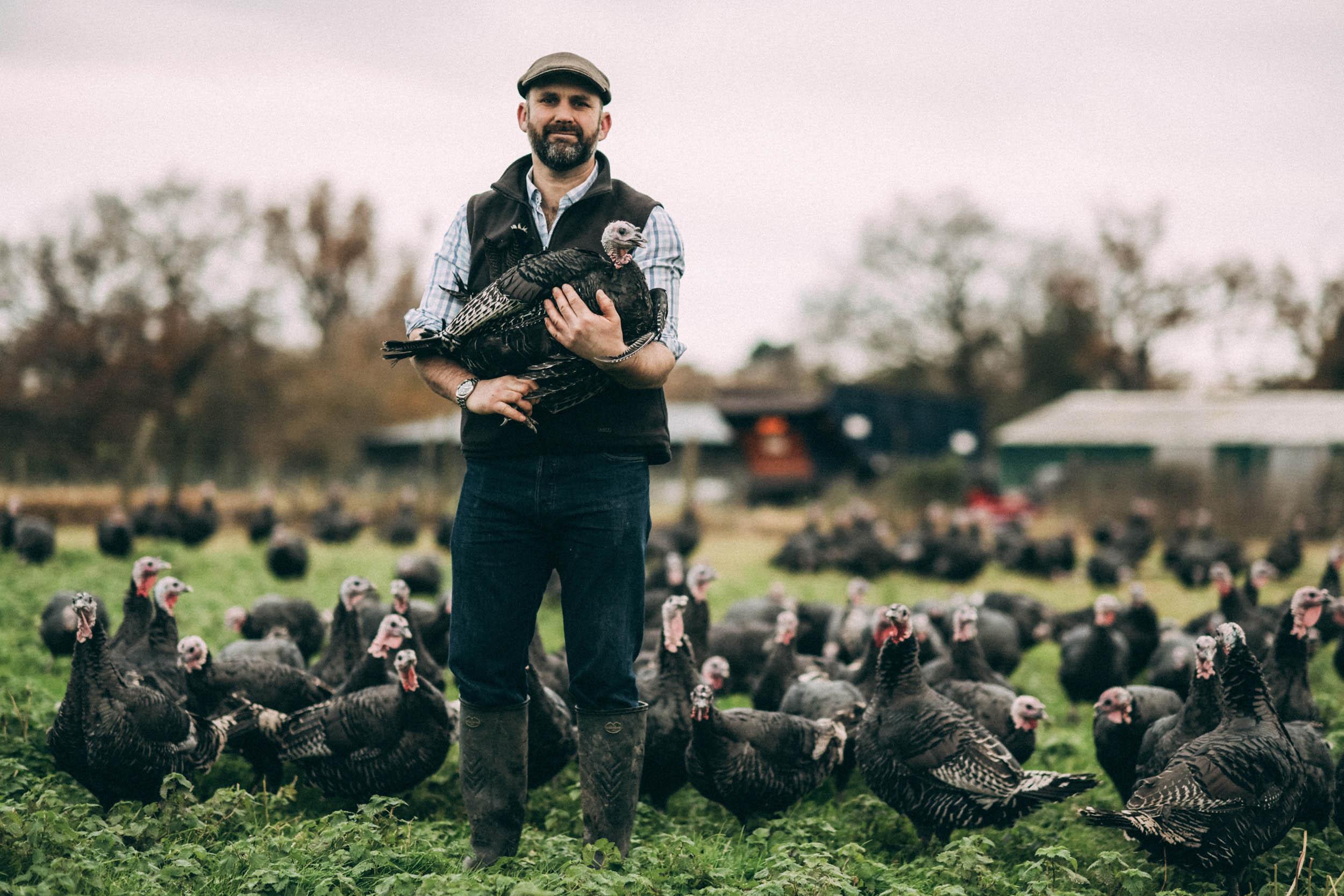 Bramble-farm-free-range-turkeys-surrey-153-adrian-joy.jpg