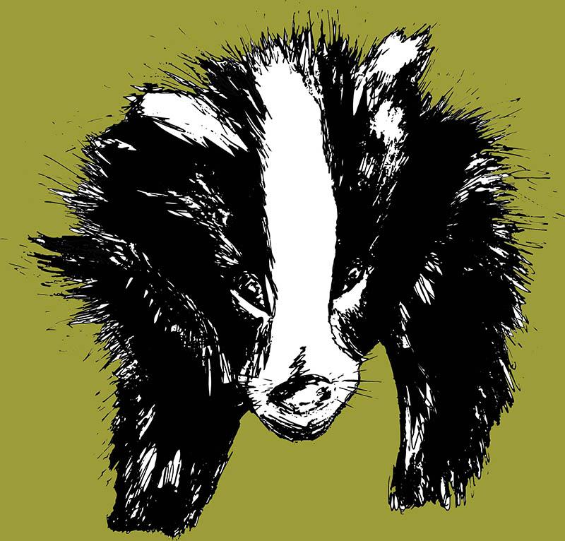 Badger Sketch, Rebecca Johnstone
