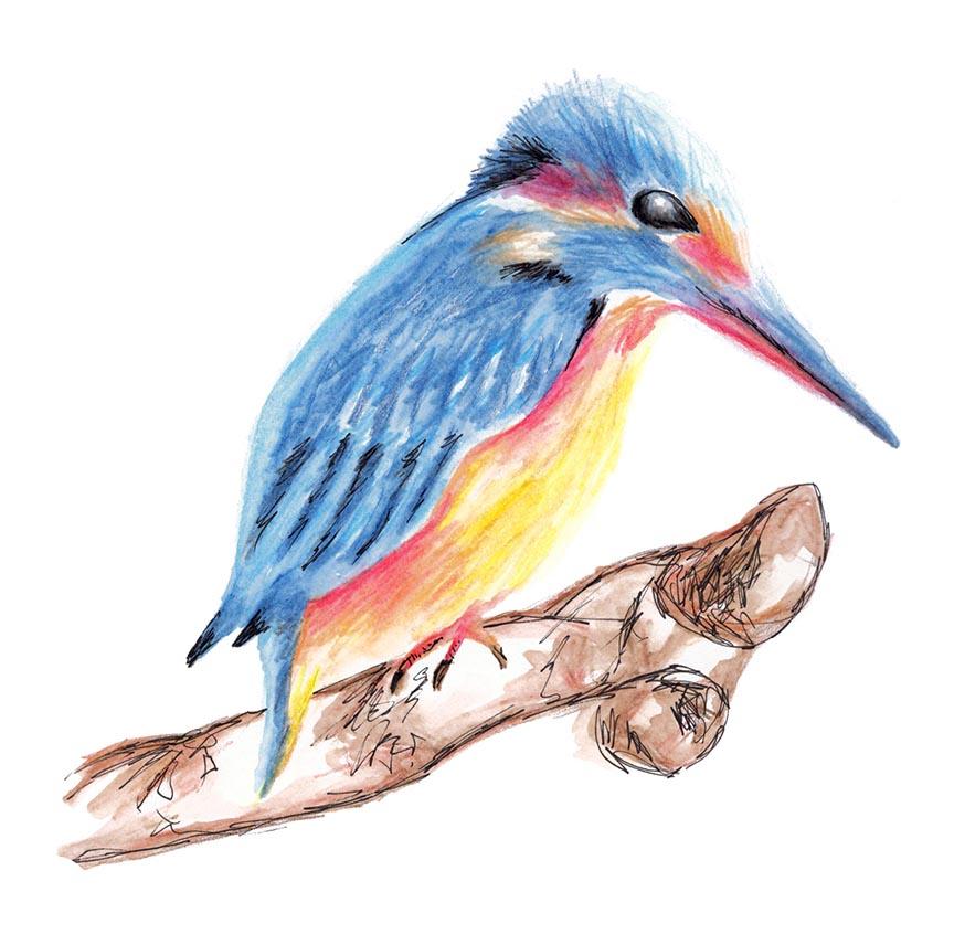 Kingfisher Watercolour Painting, Rebecca Johnstone