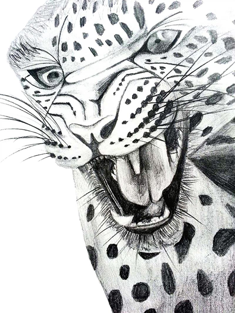 Leopard Pencil Sketch, Rebecca Johnstone
