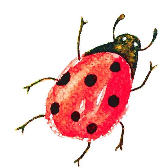 Ladybird Watercolour, Rebecca Johnstone