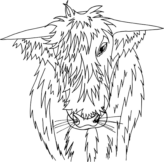 Hamish the Highland Cow illustration, Rebecca Johnstone