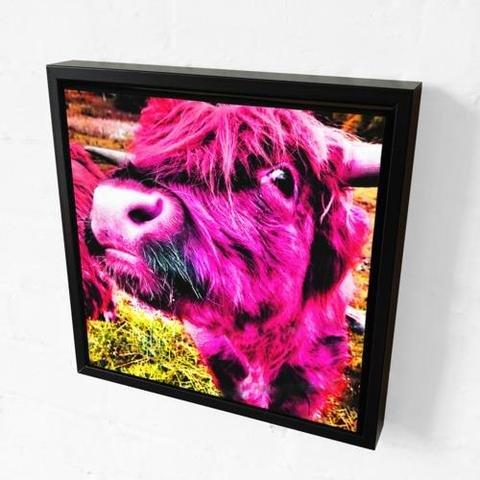 Rebecca Johnstone Highland Cow - Pink - Canvas Print