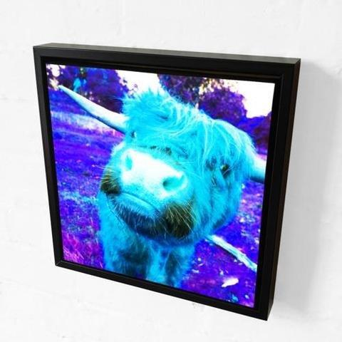 Rebecca Johnstone Highland Cow - Blue - Canvas Print