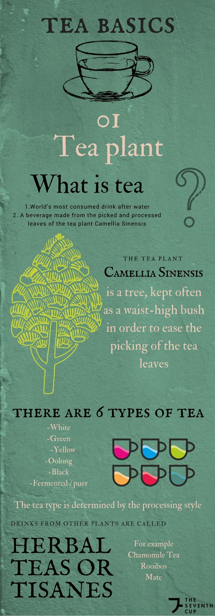 01 Tea Basics (1).jpg
