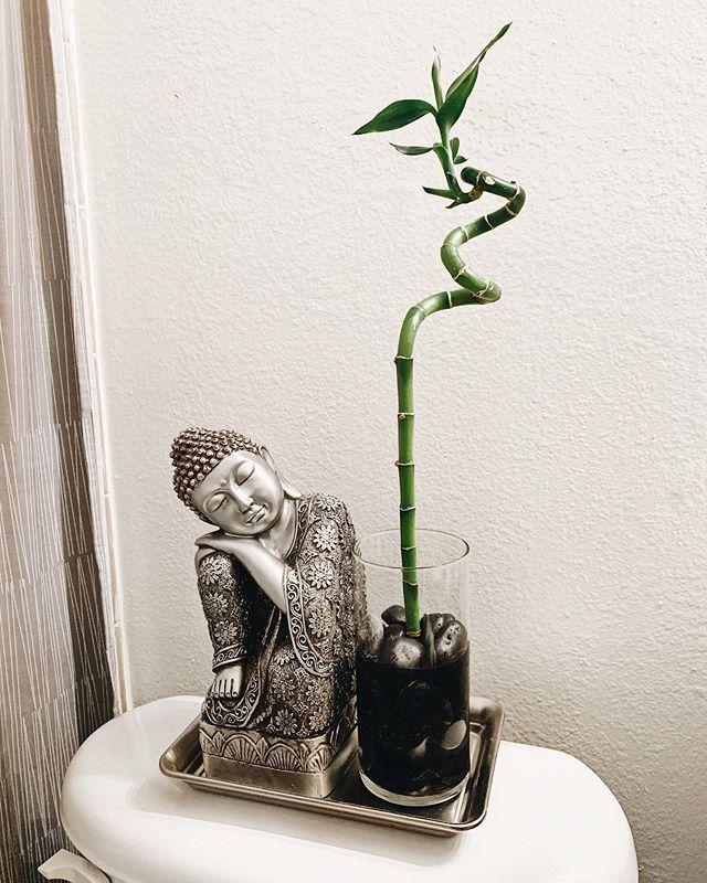 My new bamboo baby 🌱