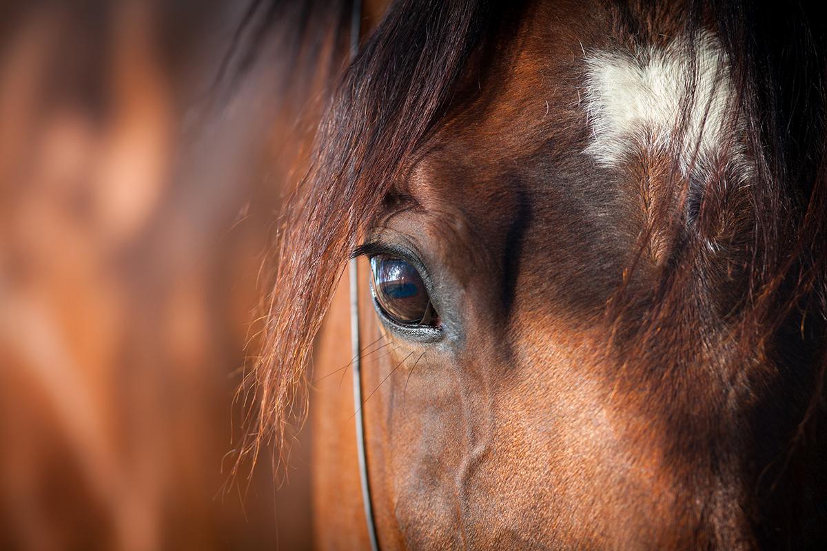 Horse-Eye-Sincerus-Leadership.jpg