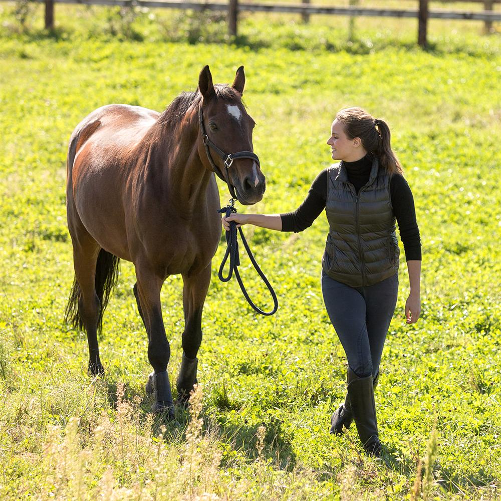 Walking-Horse-Sincerus-Leadership.jpg