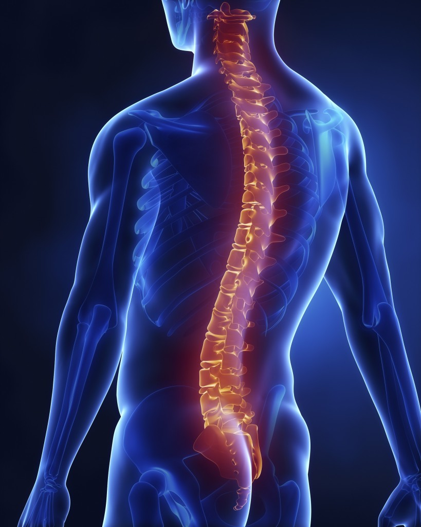 Spine 2.jpg