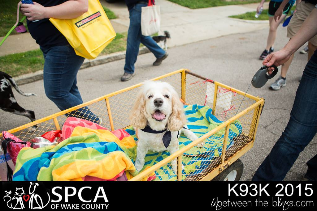 """Keith's dog """"Trooper"""", who has since passed away, was unable to participate as a walker, so Keith pulled him in a wagon during the 2015 SPCA of Wake County Dogwalk and Woofstock."""