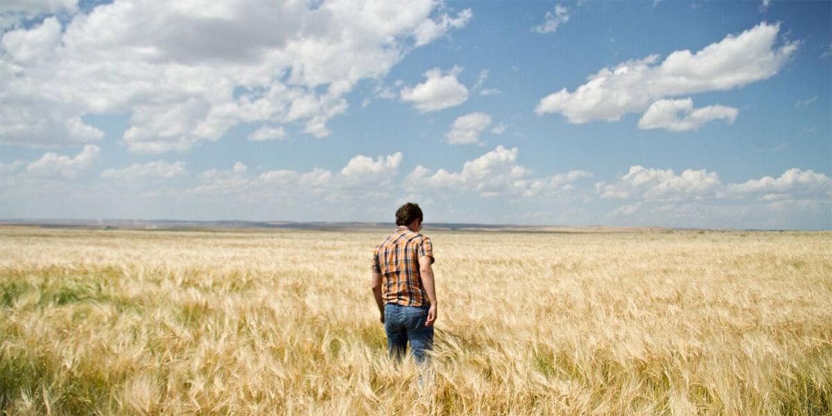 2bar_Grain field 2.jpg