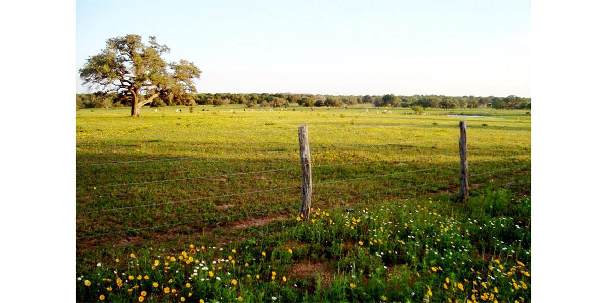 2bar_Ranch 8.jpeg