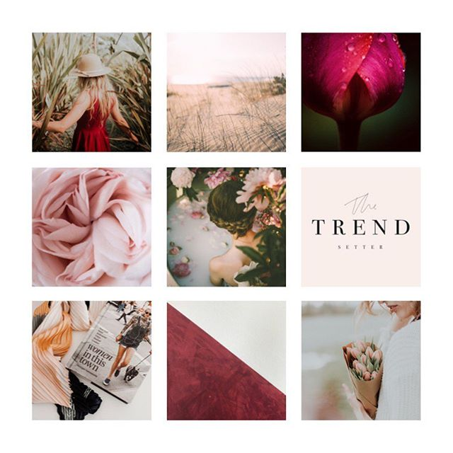 Another Monday moodboard! Here's some inspiration from Genesee Doula Co's new logo I shared recently. Love the rich tones and feminine feel.