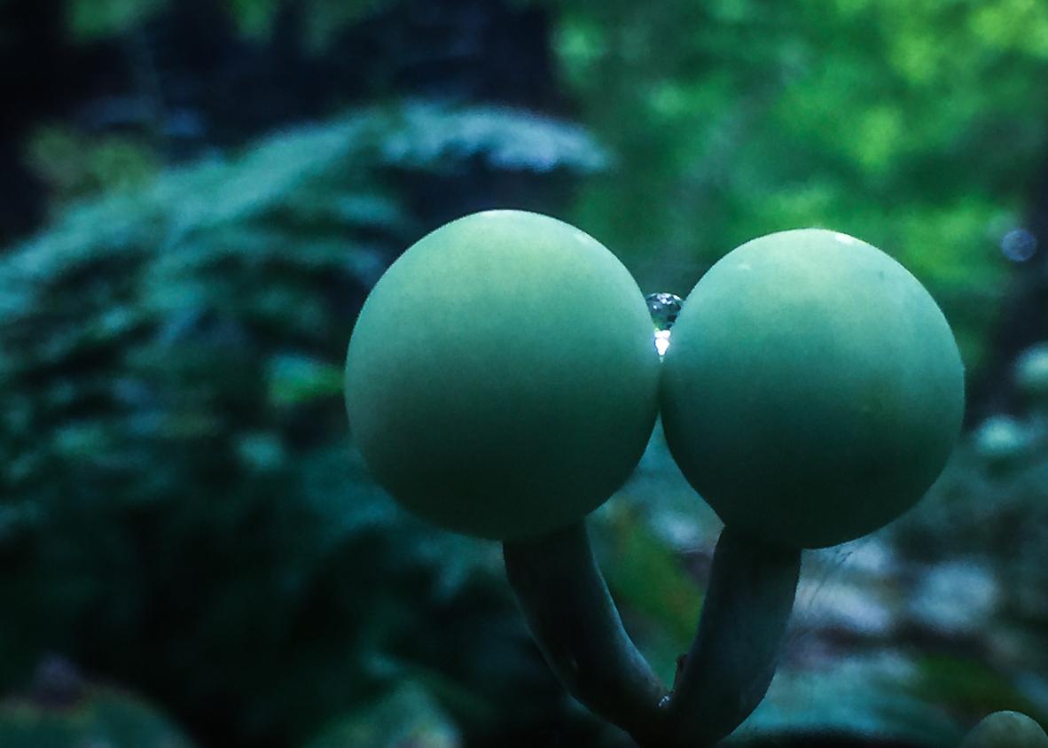 seed dew-9480.jpg