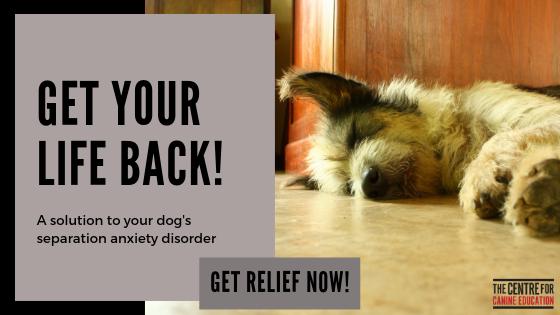 GET YOUR LIFE BACK! Blog banner ad.png