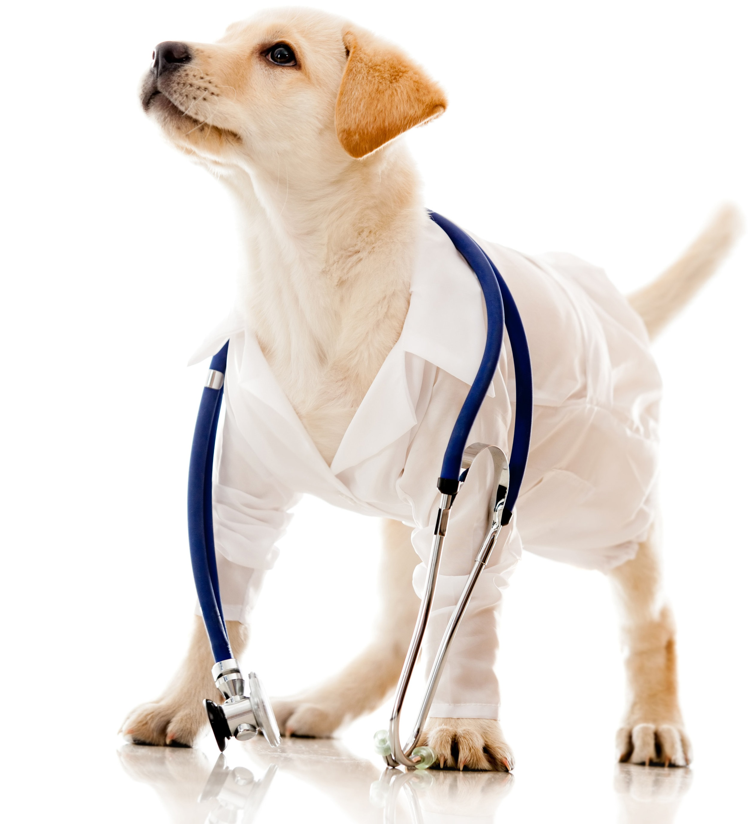VetTalks™ - FREE ON-SITE CONTINUING EDUCATION FOR TORONTO'S VETERINARIANS AND CLINIC STAFF