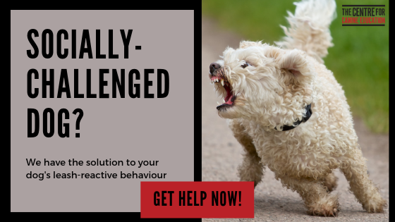 Reactive Dog Blog banner ad.png