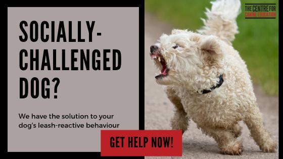 Reactive Dog Blog banner ad.png