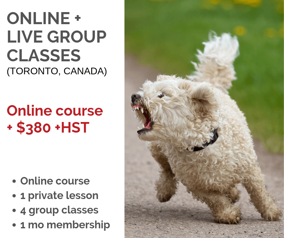 Great for local (Toronto) students wanting to work in a group environment - Only suitable for dog-dog reactivity
