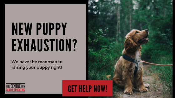 Puppy Blog banner ad.png