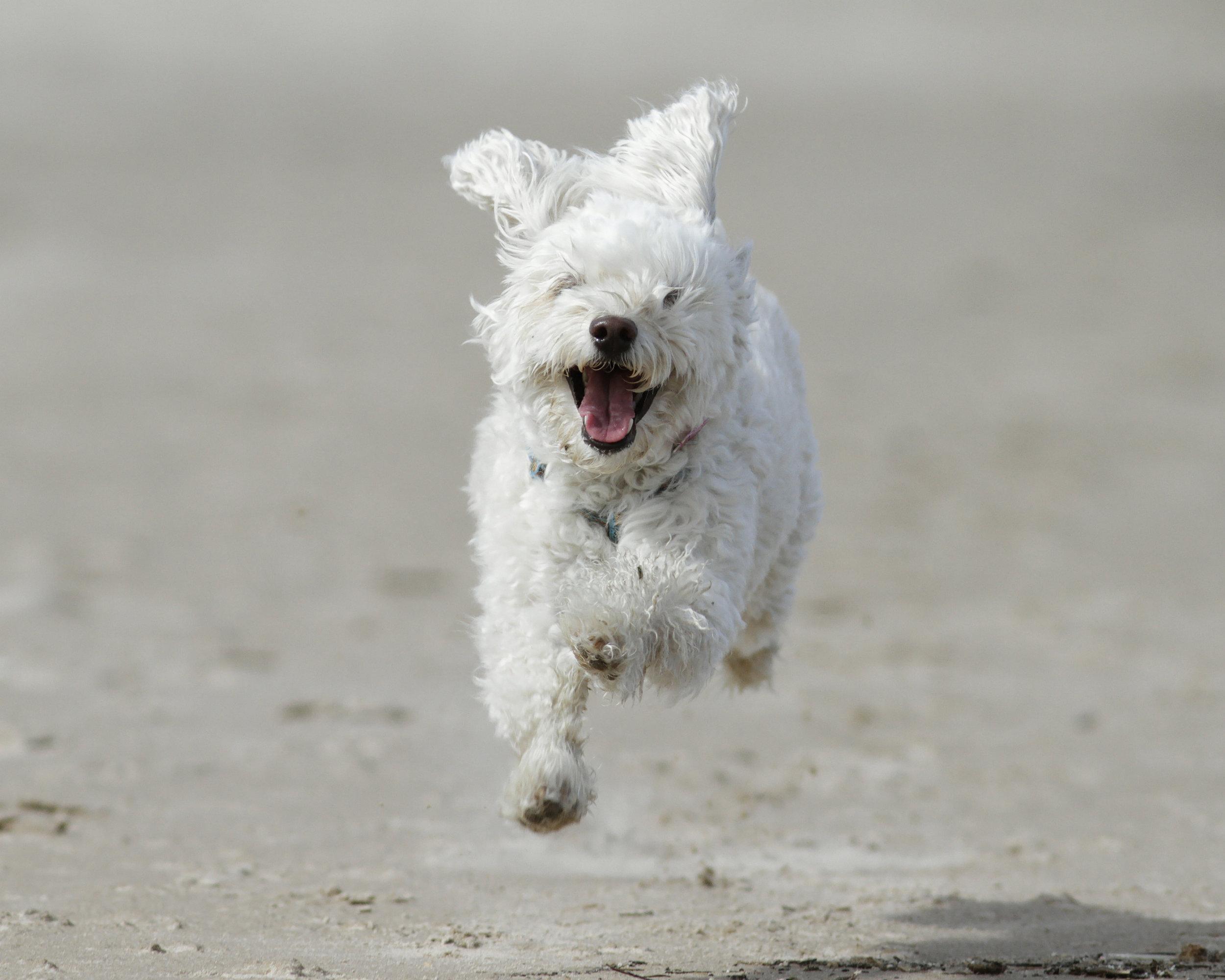 runninglittledog.jpg